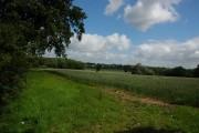 Farmland to the west of Tetbury