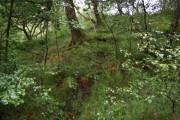 Bosky woodland