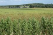 Farmland east of Charsfield, looking to Prospect Farm