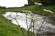 River Mersey near Chorlton Water Park