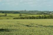 Wheat field near Worsham, Oxfordshire
