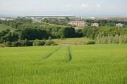 Farmland near Halbeath