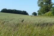 Farmland off Wick Lane