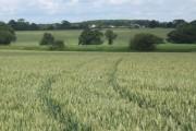 Farmland near St Cross South Elmham, looking north