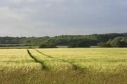 Barley, Stoke Lyne