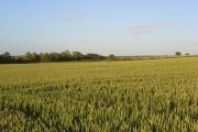 Farmland, Stoke Lyne