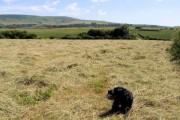 Field near Endlewick Farm, Arlington