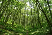 Pedwardine Wood