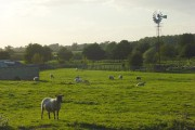 Pasture and windpump, Stoke Lyne