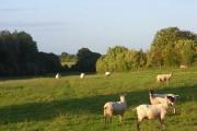 Pasture, Stoke Lyne