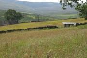 Hay meadow, Lanehead Farm