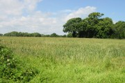 View across the field from Ferne Lane