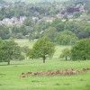 Chatsworth Park Red Deer