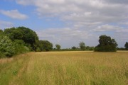 Meadow, White Waltham