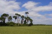 Farmland, Maidenhead