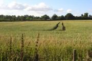 Wheat, Wokingham