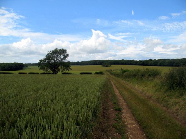 Towards Witcombe Wood