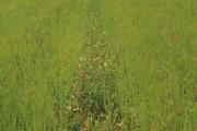 Line of Weeds