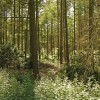 Woods on the Knowsley Estate
