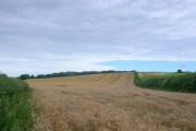 Wheat field near Admiston Farm