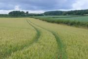 Wheat field near Tincleton