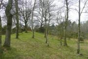 Scrubby woodland