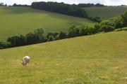 Farmland, Chinnor / Radnage
