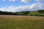 Meadow, Chinnor Hill