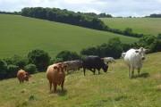 Farmland, Radnage/Chinnor