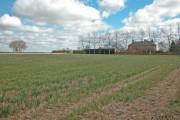 Clifton Road farmland