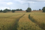 Wheat field, looking north to line of pylons