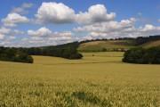 Wheat, Radnage