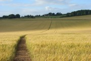 Barley, Farnborough