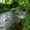 River Don at Wortley Bottom