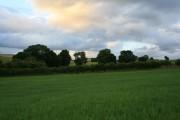 Toward Wisteria Farm