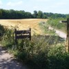 Path Fork by Polesden Lacey