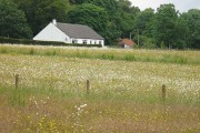 Hay meadow, Trislaig