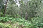 Woodland, Camusnagall