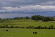 Pasture, Nicholforest