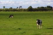 Pasture, Abbeytown
