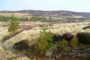 Moorland north of Tomich