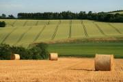 Farmland at Legerwood