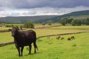 Pastures, Alston