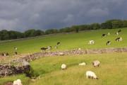 Pastures, Orton