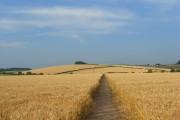 Farmland, Little Marlow