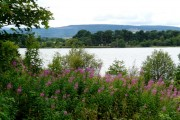 Loch Eye with Rosebay Willow-herb