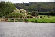Footbridge, Hagley Pool