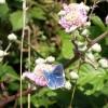 Blue butterfly near Grange Court