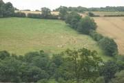 Across Swainhill Dingle
