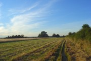 Farmland, Cookham